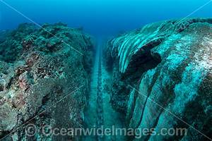 Pics For > Oceanic Trench Underwater