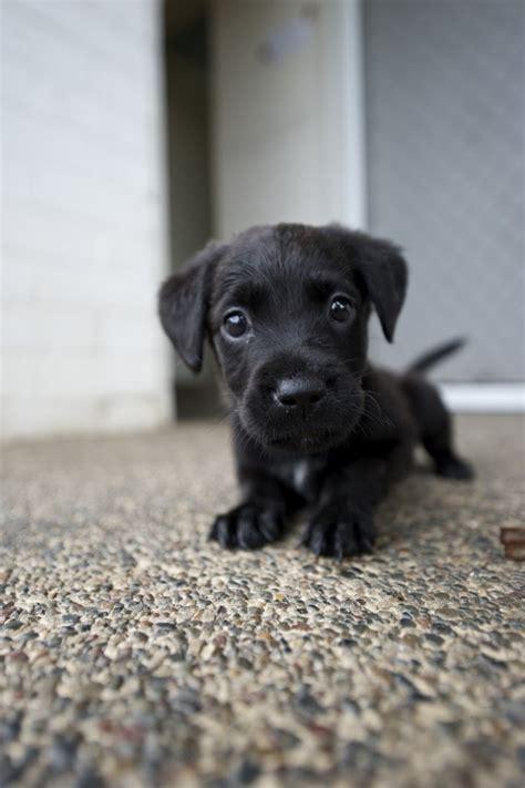 Another Guilt Puppy 1fatgirlshrinking