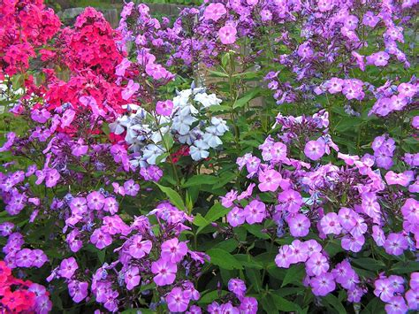 gardening simple english wikipedia   encyclopedia