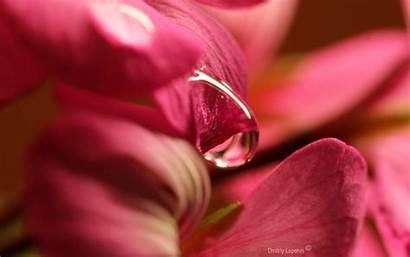 Petals Flower Drop Wallhere