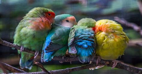 15 Adorable Pictures Of Birds Huddled Together For Warmth