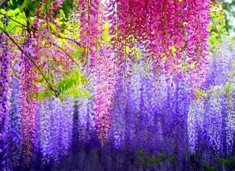 fiore giapponese simbologia giapponese significato fiori simbologia