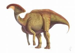 Parasaurolophus | Extinct Animals