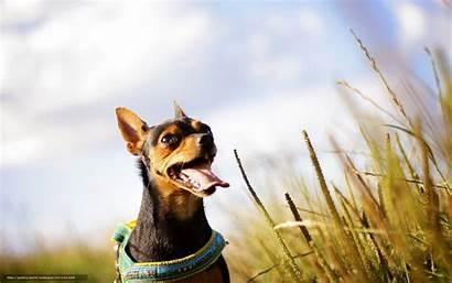 Summer Desktop Dog Field Puppy Wallpapersafari
