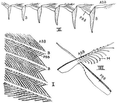 Feather Parts  Clipart Etc