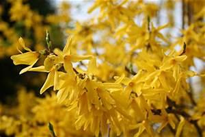 Wann Dürfen Hecken Geschnitten Werden : rhododendron geh lze hecken landwirtschaftskammer nordrhein westfalen ~ Frokenaadalensverden.com Haus und Dekorationen