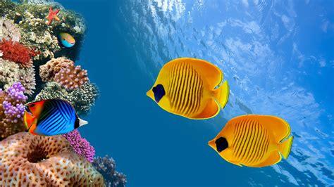 Fish Underwater 4k Ultra Hd Wallpaper