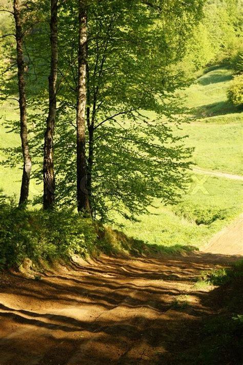 Road In Birkenwald Im Frühjahr  Stockfoto Colourbox