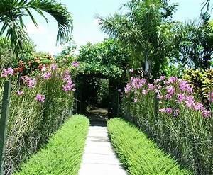 Plants for tropical gardens for Garden plant design