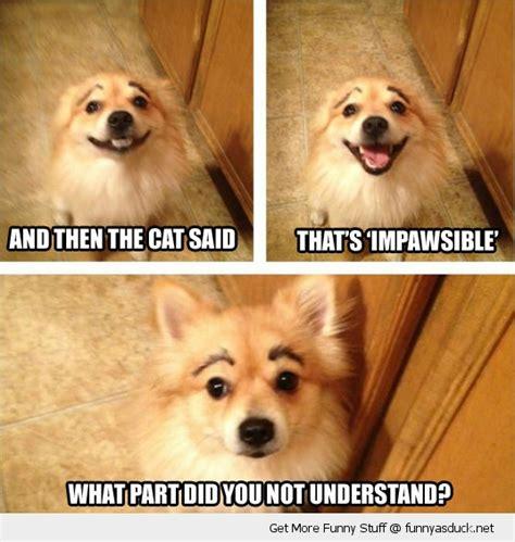 Dog Quotes Funny Jokes Quotesgram