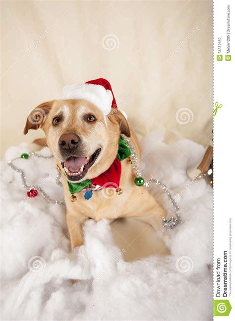 christmas dog stock photo image  merry eyes family