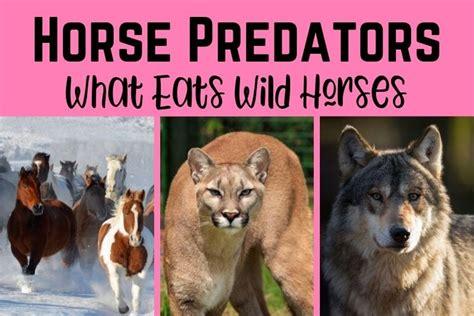 horses predators wild horse eats games play virtual