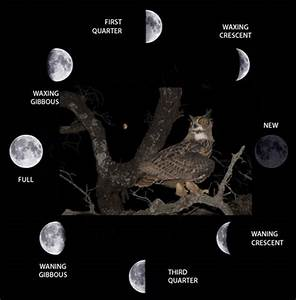 The Waxing  Waning Phases And First  Third Quarter Moons  Often Called A
