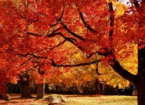 best places to visit fall foliage