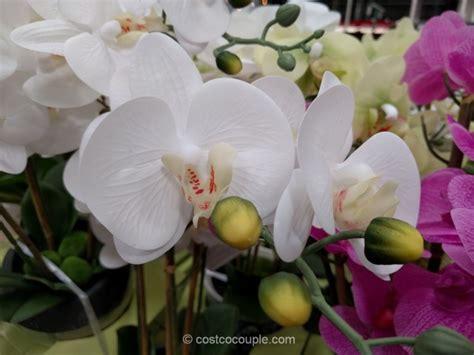 beaumont designs artificial orchid