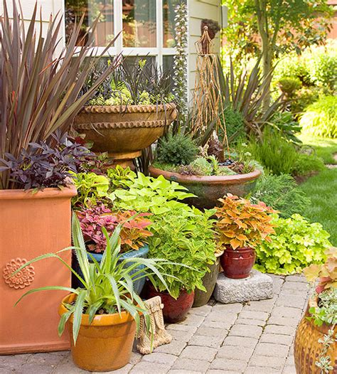potted trees for patio how to container gardens together 4373