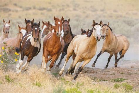 horses wild ponies southeast