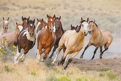 Horses Wild Ponies