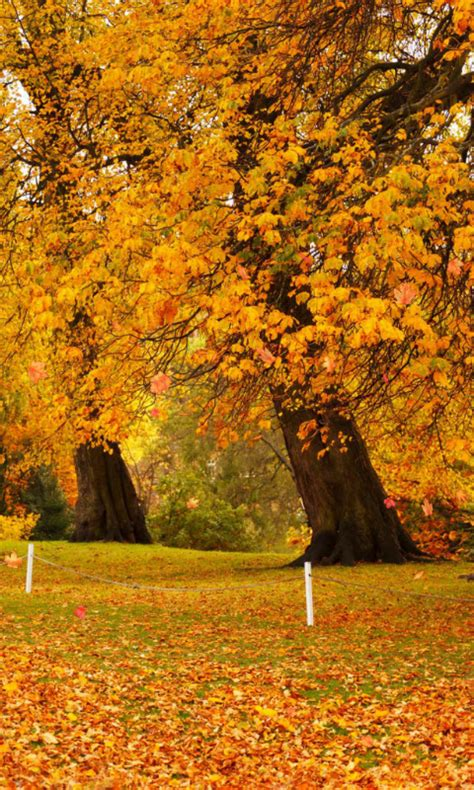 Autumn Wallpaper by Autumn Wallpaper Appstore For Android