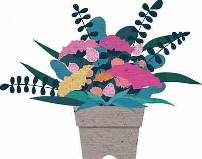 Illustration Flower Plant Potted Pixabay Flowers Carnation