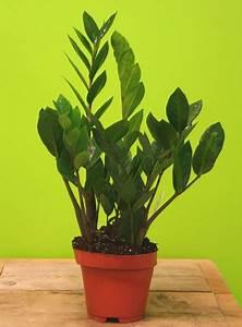 Meilleur Site De Vente De Plantes En Ligne : vente plante verte en ligne pivoine etc ~ Melissatoandfro.com Idées de Décoration