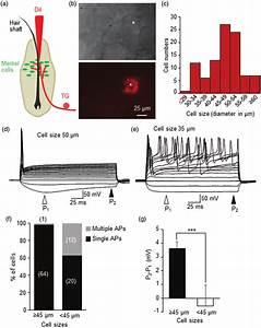 Labeled Neuron Firing Diagram