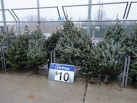 real christmas tree cost walmart any size tree real 10 walmart ship saves