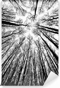 Papier Peint Arbre Noir Et Blanc : papiers peints noir et blanc pixers nous vivons pour changer ~ Nature-et-papiers.com Idées de Décoration
