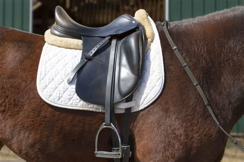 english saddle measure saddles horses tell tree horse animals mom bars quarter