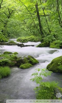 forest river japan ultra hd desktop background wallpaper