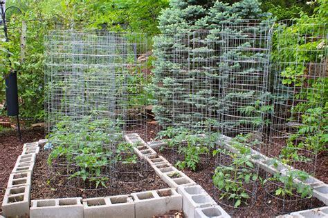 how to make your home vegetable garden look beautiful