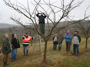 Taille De Cerisier : louer un cerisier la bonne affaire ~ Melissatoandfro.com Idées de Décoration