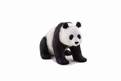 Panda Planet Giant Animal Elephanta Nz