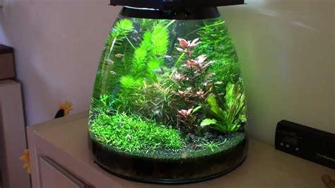 Mini Aquascape Nano Tank