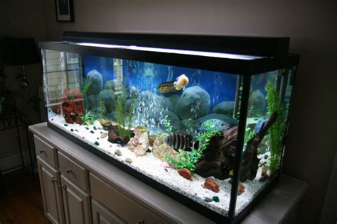 gallon aquarium dealing  equipment household