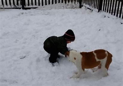 Dog Snow Animated Kid Giphy Funny Fail