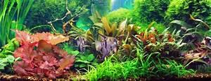 Pflanzen Für Aquarium : das aquarium ratgeber rund um die aquaristik ~ Buech-reservation.com Haus und Dekorationen