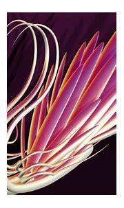 Abstract 3d fractal color cg digital art artistic animals ...