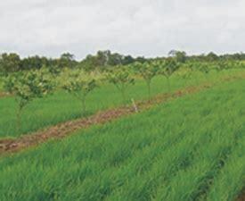 implementasi sistem tata air satu arah  lahan rawa