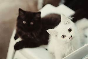 black, black and white, cats, cute, eyes - image #191676 ...