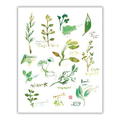 herbes aromatiques en cuisine herbes aromatiques dans la cuisine aquarelle affiche