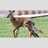 Conjoined Twins Animals | 500 x 280 jpeg 36kB