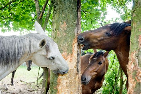 Five Common Mistakes Made When Feeding A Horse