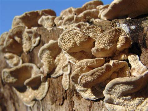 Pilze Im Gartenrasen by Pilze