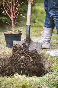 Comment Planter Un Camélia : arbuste en pot comment le planter correctement d tente jardin ~ Melissatoandfro.com Idées de Décoration