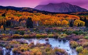 mountain, kebler, pass, a, colorado, usa, fall, nature, landscape