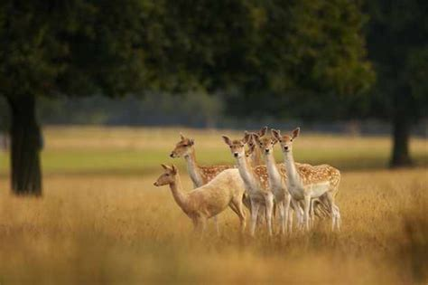 countryfile calendar competition finalists vote