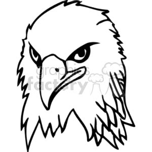 eagle face drawing    clipartmag