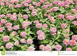 Blumen Im Sommer : blumen sommer kreative ideen f r innendekoration und wohndesign ~ Whattoseeinmadrid.com Haus und Dekorationen