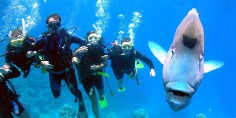 scuba diving lessons houston texas tx gigglin marlin